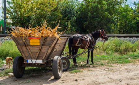 Brown horse with romanian peasant wooden carriage filled with dried corn photo