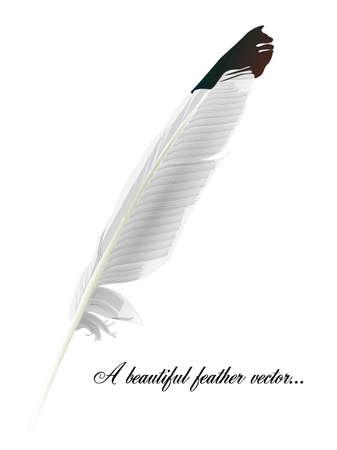 plume blanche: White Feather vecteur