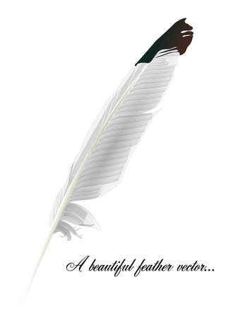feather vector: White feather vector