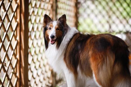 doggie: doggie Stock Photo