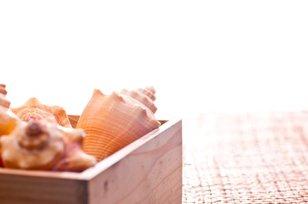 Sea shells in a pine wood box on a coconut weaved mat photo