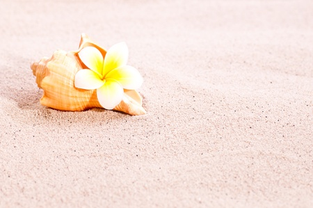 A conch sea shell and a yellow plumeria flower on beach sand photo