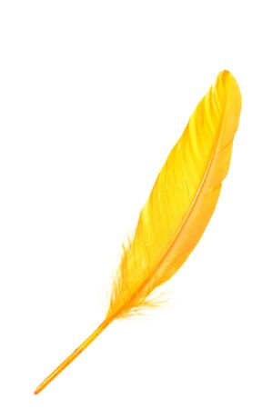 weightless: Orange wing feather isolated on white background