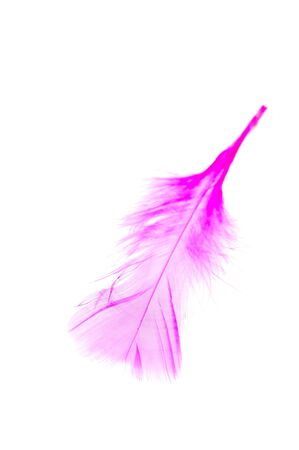 weightless: Pink wing feather isolated on white background