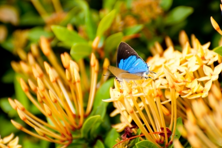 Blue butterfly on wild flower photo