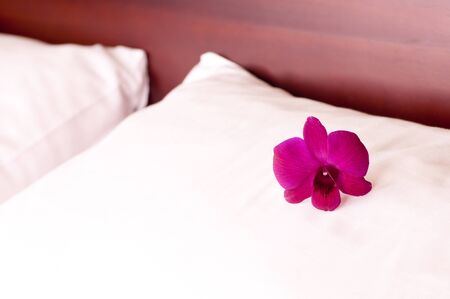 Purple orchid on a pillow in a hotel room photo