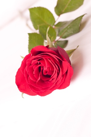 Romantic setting on a bed with red rose close up photo