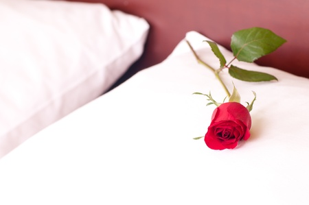 Red rose on a pillow  photo