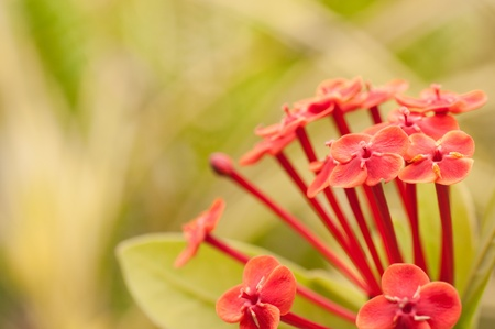 Wild red flowers with green background in the sun Stock Photo - 16481264