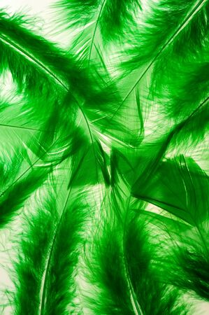 levitate: Green fluffy feathers as a background