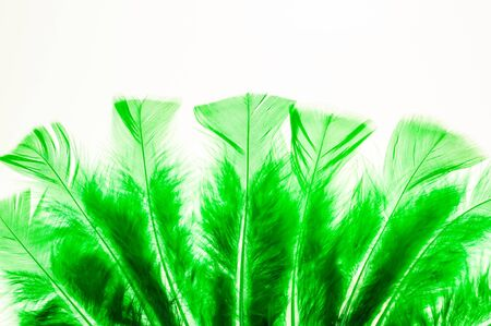 levitate: Green fluffy feathers as a border Stock Photo