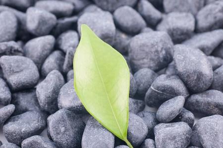 Green leaf on black zen stones close up Stock Photo - 16960850