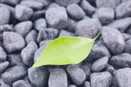 Green leaf on black zen stones close up Stock Photo - 16960849