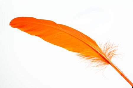 Orange duck feather close up