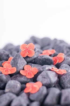 Orange flowers on black zen stone close up over white background  Stock Photo - 17168311