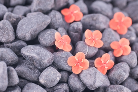 Orange flowers on black zen stones close up photo