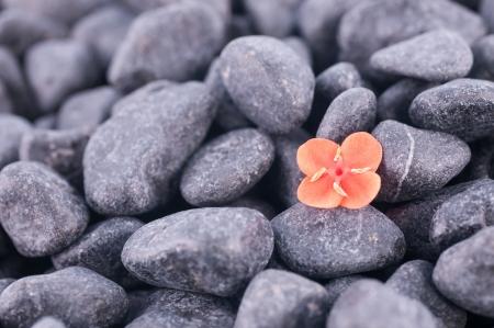 prince of peace: Ixora Prince of orange flower on black zen stones background