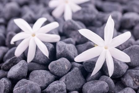 Three jasmine flowers on zen stones background Stock Photo
