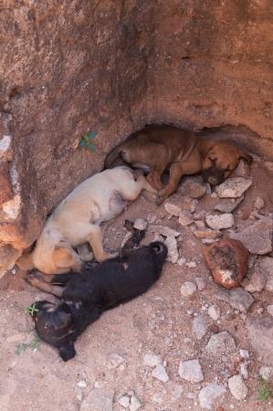 Three puppies napping in ancient city of Polonnaruwa, Sri Lanka photo