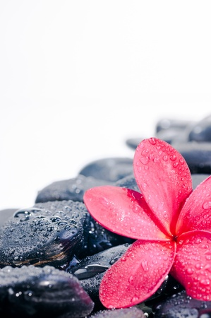 Red frangipani flower on black zen stones with water drops photo