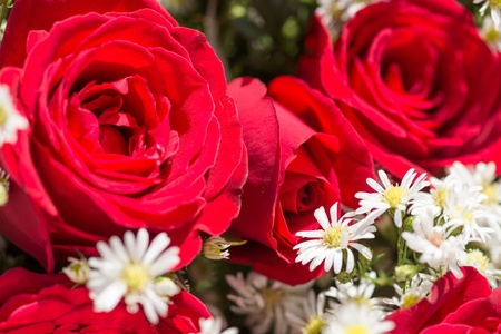 Red roses and white baby photo