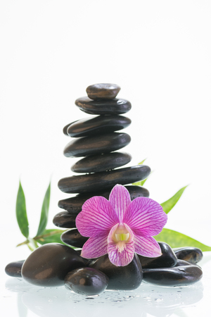 dendrobium: Black zen stones with purple striped Dendrobium orchid Stock Photo