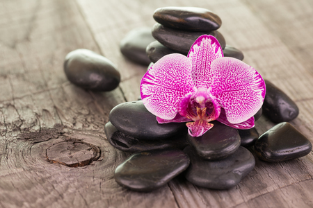speckled wood: Fuchsia Moth Orchid and black stones on weathered deck