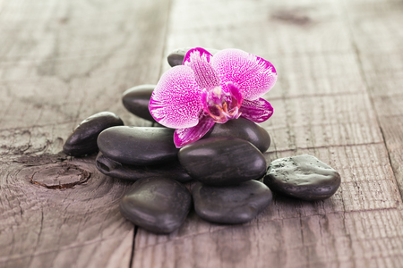 speckled wood: Fuchsia Moth orchid and black stones on weathered deck Stock Photo