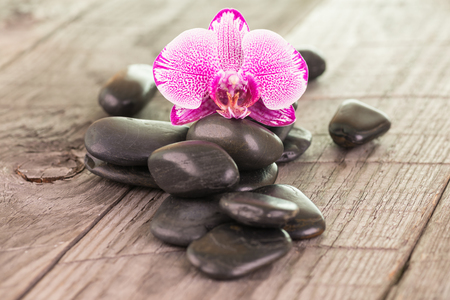 Fuchsia Moth orchid and black stones close-up photo