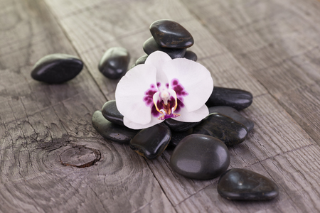 White Moth orchid and black stones on weathered deck close-up Stock Photo - 37464226