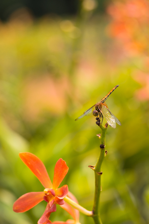 Dragonfly perched on a stem