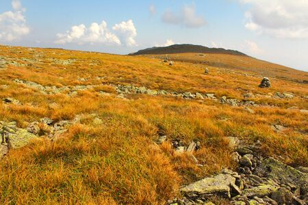 Arctic alpine lawn of sedges grasses and herbs near the summit of Mt. Washington in the White Mountains of New Hampshire.  This is a tundra habitat with glacial topography. The view is towards Mt. Monroe and the trail is marked with a chain of cairns.