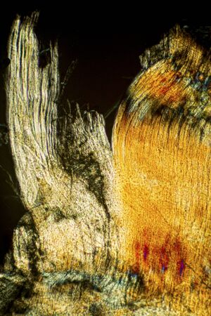 Colorful abstract vertical micrograph of muscle fibers from an earthworm. Polarization microscopy at 100x.