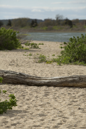 ocean state: Driftwood log lying on a sandy beach with a swale at the ocean in Bluff Point State Park on Long Island Sound of the Atlantic Ocean in Connecticut.