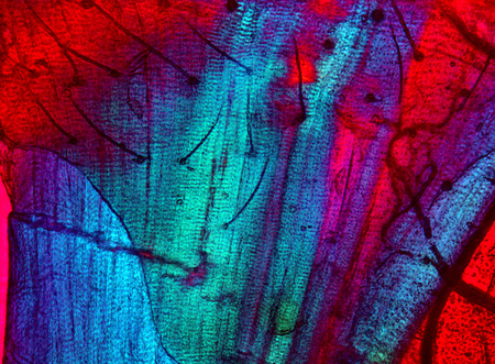 micrograph: Abstract, polarizing, colorful micrograph of moth parts, including muscle, bristles and carapace. Taken at 100x. Stock Photo