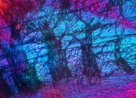 branching: Abstract, polarizing micrograph of branching tracheal tubes from muscle of a green bottle fly, taken at 200x. Stock Photo