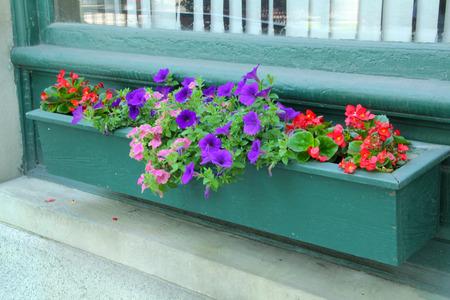 flores moradas: Flores en caja de la ventana verde, petunias p�rpuras y begonias rojas, centro de Keene, Nueva Hampshire. Foto de archivo