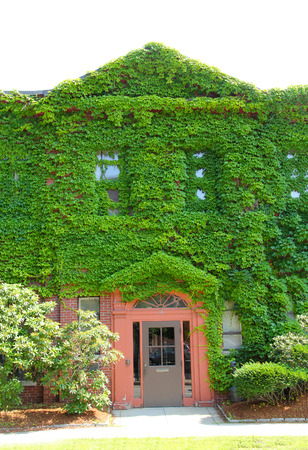 hampshire: Green ivy covered facade, with clear doorway, of newspaper building, downtown Keene, New Hampshire.
