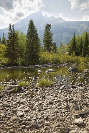 pine creek: Teton Mountains and pine trees at Cottonwood Creek, near Jenny Lake in Jackson Hole, Wyoming, vertical.