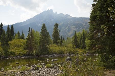 cottonwood tree: Teton Mountains and pine trees at Cottonwood Creek, near Jenny Lake in Jackson Hole, Wyoming.