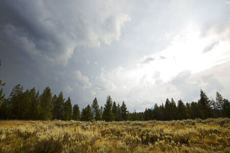 sagebrush: Dramatic clouds over an opening in the pine forest, with sagebrush near Swan Lake, Jackson Hole, Wyoming, horizontal. Stock Photo