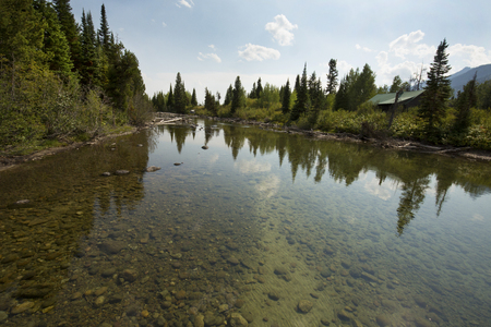 jenny: Reflections in the water at Cottonwood Creek, near Jenny Lake in Jackson Hole, Wyoming.