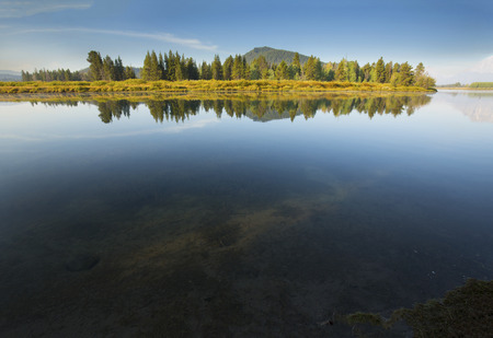 still water: Forest reflections in still water of the Snake River in early morning, Grand Teton National Park, Wyoming, summertime.