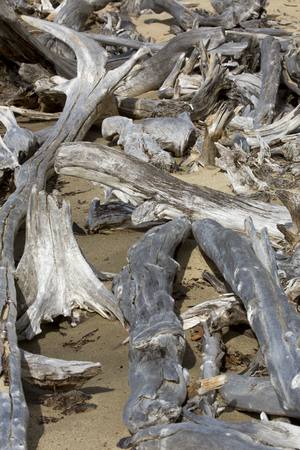 flagstaff: Bleached logs of driftwood on a sandy beach of Flagstaff Lake in northwestern Maine. Stock Photo