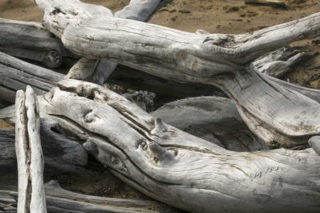 county somerset: Closeup of two bleached driftwood logs on the sandy beach of Flagstaff Lake in northwestern Maine.