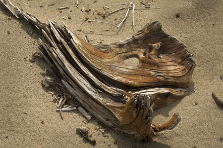 flagstaff: Driftwood with a brown ochre stain lies in the sand on a beach of Flagstaff Lake in northwestern Maine, resembling a skull.