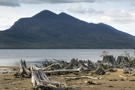 county somerset: Driftwood at Flagstaff Lake, with mountains of the Bigelow Range in Somerset County, northwestern Maine. Stock Photo