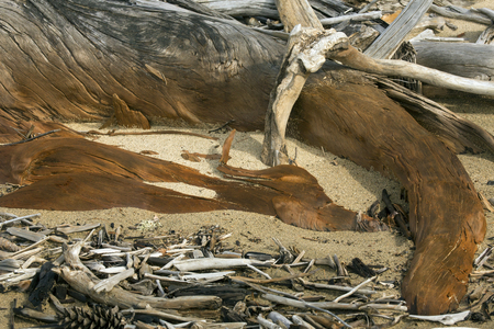 county somerset: Old stump of curved, bleached driftwood, with a brown ochre stain, lies embedded in the sand at Flagstaff Lake in northwestern Maine, closeup. Stock Photo