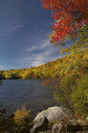 red maples: Dramatic fall foliage of red maples and yellow birches along shore of Russell Pond in the White Mountains near Woodstock, New Hampshire, vertical image.