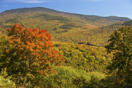 national forest: Bright red maple in autumn on hillside overlooking the Sandwich Range in the White Mountains National Forest of New Hampshire. Stock Photo